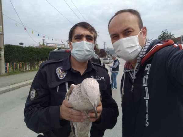 Yaralı halde uygulama noktasına düşen martıya polis ekipleri sahip çıktı