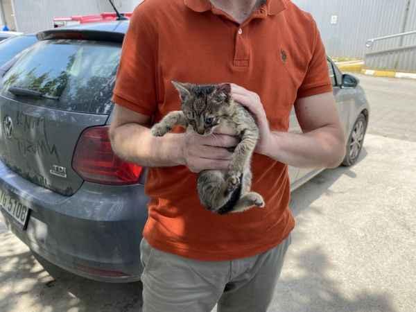 Aracın motor ve tekerlek kısmına giren yavru kediler itfaiye ekiplerince çıkarıldı