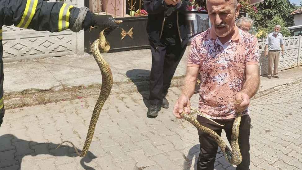 """Herkes görünce kaçar o eline alıp poz verdi... """"Yılanları öldürmeyin!"""""""