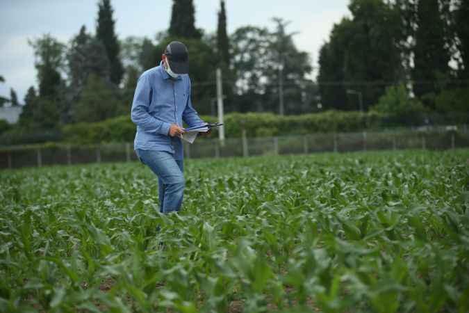 Mısır Araştırma Enstitüsünde geliştirilen tohumlar Türk tarımına güç katıyor