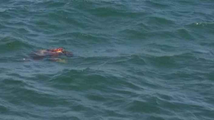 Kandıra'da denizde erkek cesedi bulundu