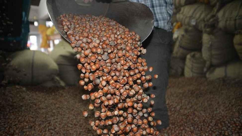 """Fındık üreticisi """"30 liradan aşağıya olmaz"""" diyor... Artık gramla almaya başlarız!"""