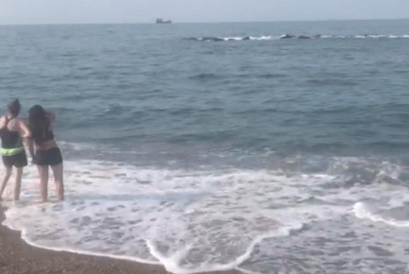 Şimdi de denizanası iddiası Karasu'da denizde o gün neler oldu?
