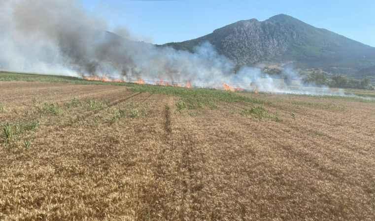 Bilecik'te elektrik direğinden çıkan kıvılcımlar 15 dönüm buğday tarlasını küle çevirdi