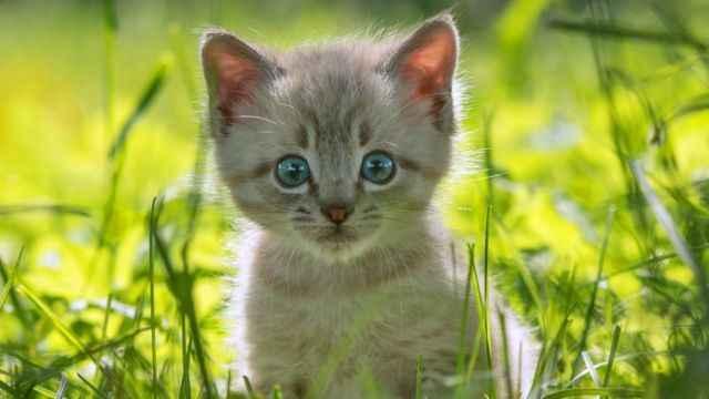 Sıcaklıkların artmasıyla yüksekten düşen kedilerin sayısı da arttı!