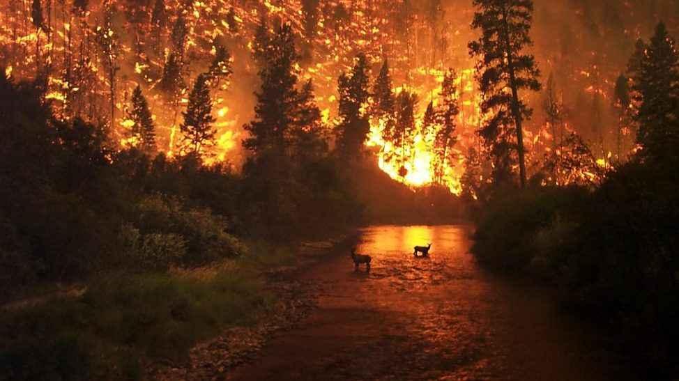 Sakarya'dan orman yangınlarına fidanlı destek