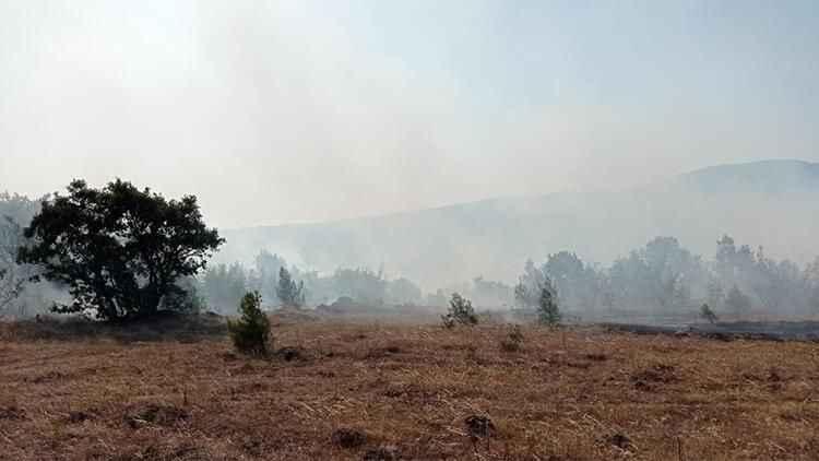 Balıkesir'in Savaştepe ilçesinde orman yangını