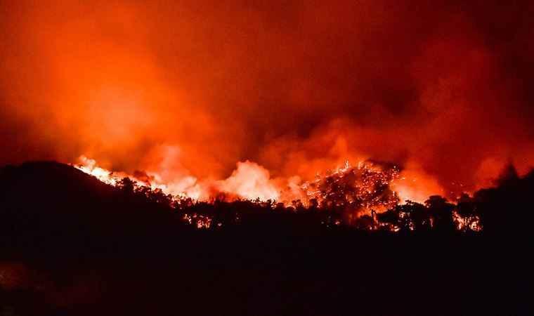 Orman yangınlarında can kaybı arttı