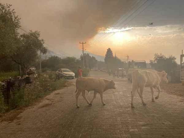 Alevler arasında kalan hayvanların çaresizliği