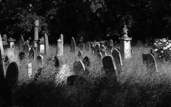 Define avcıları o mezarlığı talan ettil! Asırlık ağaçları oyarak da altın aradılar...