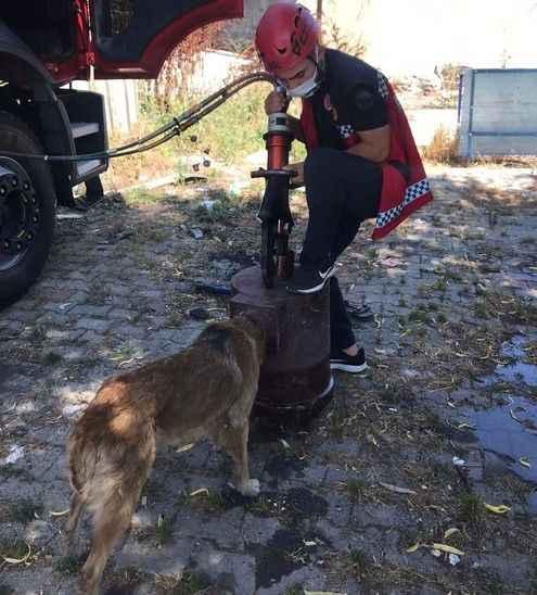 Kafası sobaya sıkışan köpeği itfaiye kurtardı