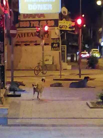 Şikayetler bitmiyor! Bu seferde başıboş sokak köpeklerinin saldırdığı kedi telef oldu!