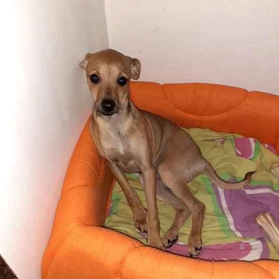 Gece vakti ortadan kaybolan 'Gece' isimli köpek her yerde aranıyor!