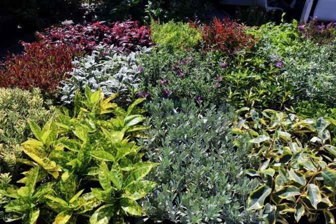Peyzaj ve süs bitkileri, bu fuardan dünyaya açılıyor