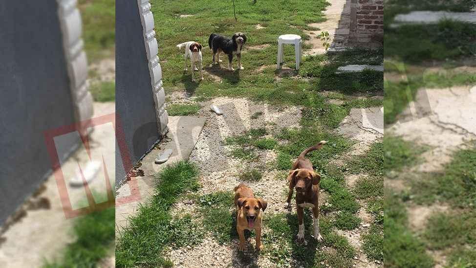 Sokak köpekleri şikayetlerinin ardı arkası kesilmiyor...
