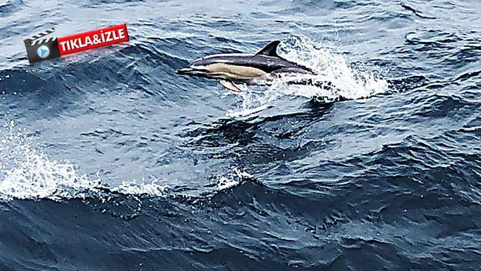 Karasu'da yunuslar  tekne ile yarıştı...