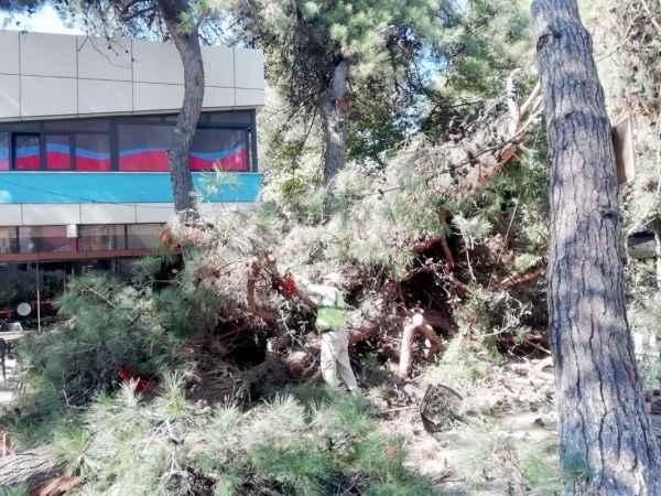 Kocaeli'de devrilen çam ağacı çay bahçesinde zarara yol açtı