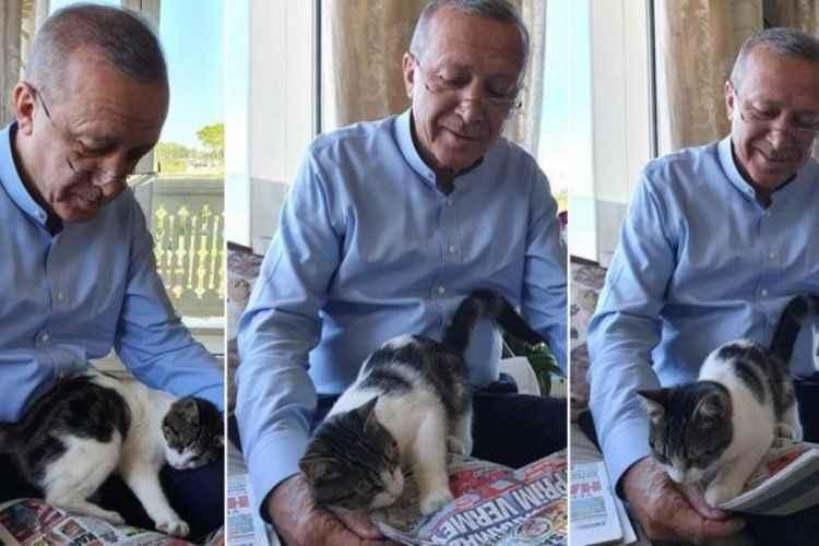 Cumhurbaşkanı Erdoğan'dan gülümseten paylaşım! 'Pıt pıt şeker
