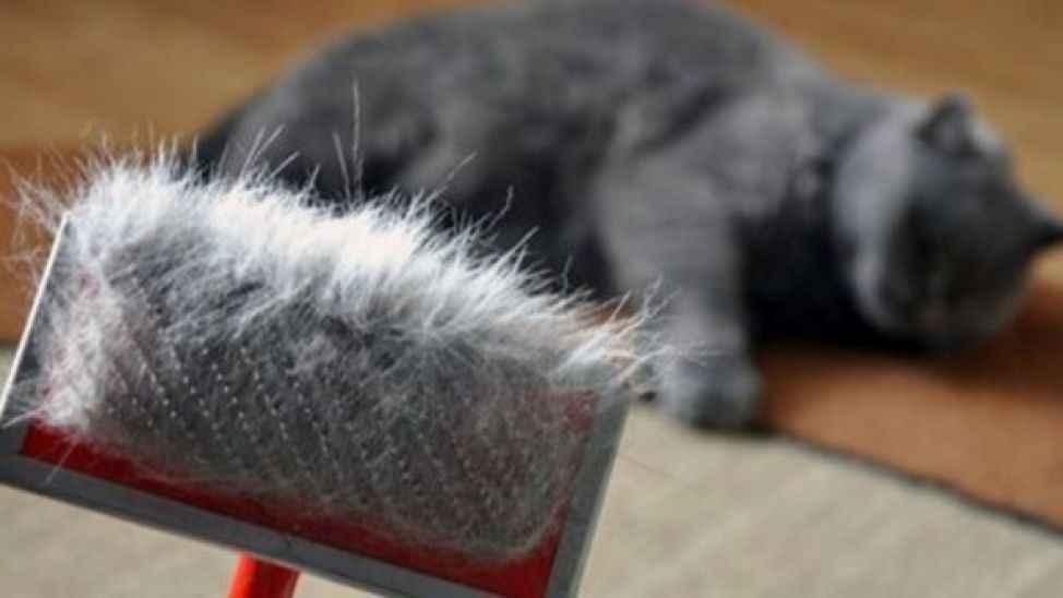 Kedi ve köpeklerde tüy dökümü hastalık yapar mı?