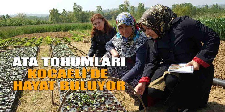 """Kocaeli'de Çiftçilere """"Ata tohumu"""" Dağıtılıyor"""