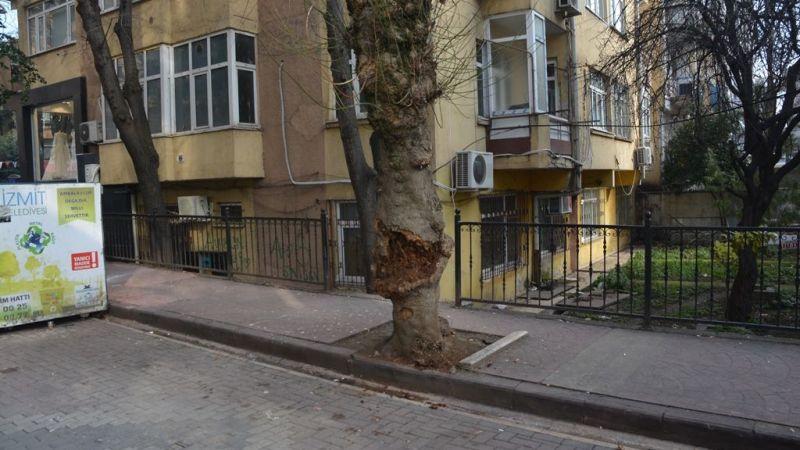 Vatandaşı Korkutan Ağaç Kesildi