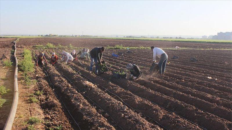 Kocaeli'de çiftçiler üretime devam ediyor