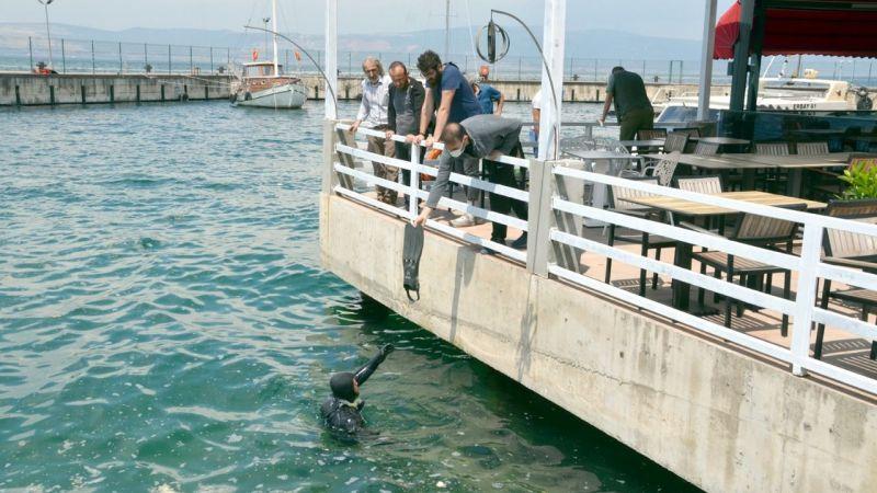 Kocaeli'de denize düşerek kaybolan kedinin yavrularına esnaf sahip çıktı
