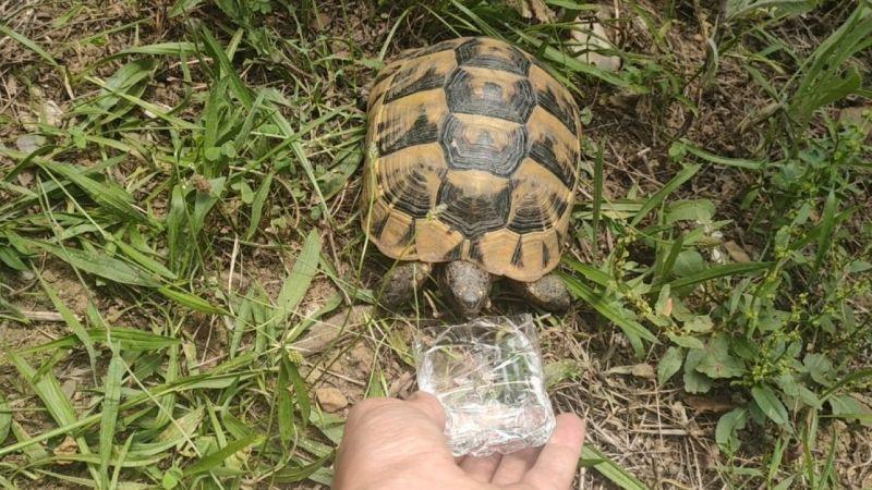 Kocaeli'de hayvansever vatandaş bitkin halde bulduğu kaplumbağaya su içirdi
