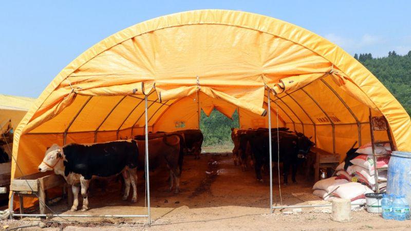 Kocaeli'de hayvan pazarındaki kurbanlıklar alıcılarını bekliyor