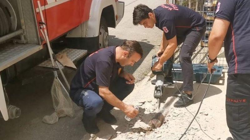 Kocaeli'de kafası demir boruya sıkışan kediyi itfaiye kurtardı