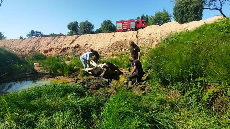 Kocaeli'de bataklığa saplanan inek itfaiye ekiplerinin yardımıyla kurtarıldı