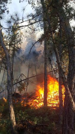 Bursa'da çıkan orman yangınına havadan ve karadan müdahale ediliyor