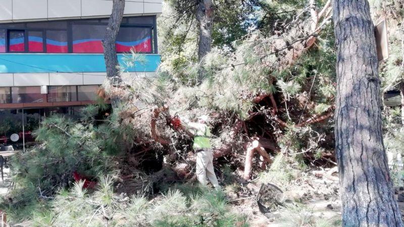 Kocaeli'de çam ağacı çay bahçesinde devrildi