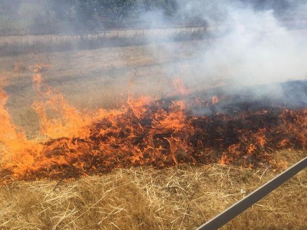 Aydın'da sigara izmariti yangın çıkardı