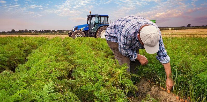 Yavuz'dan çiftçiye müjde