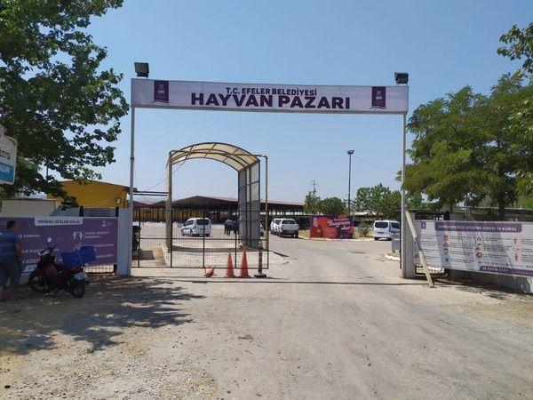 Aydın'da Hayvan Pazarı boş kaldı