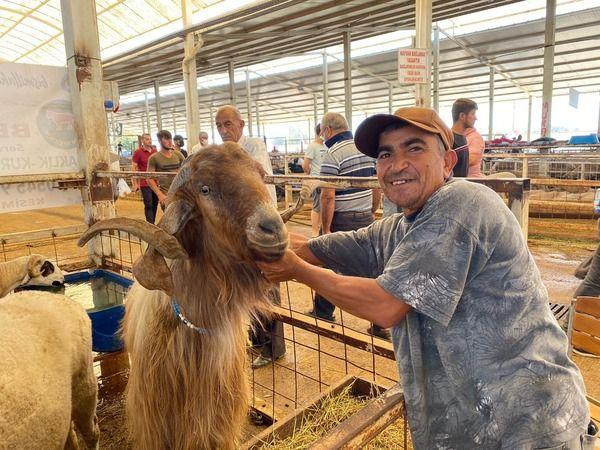 Nazilli'de dev keçi ilgi odağı oldu