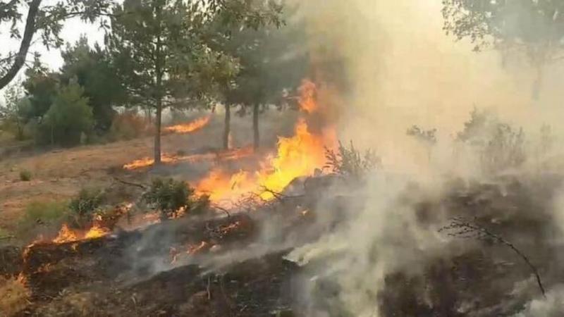 Bozdoğan'da yangın
