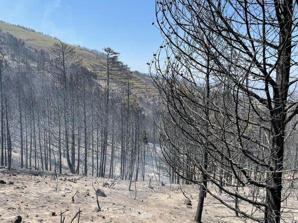 400 hektar alan zarar gördü