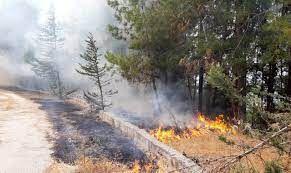 Aydın'da yangınlar ucuz atlatıldı