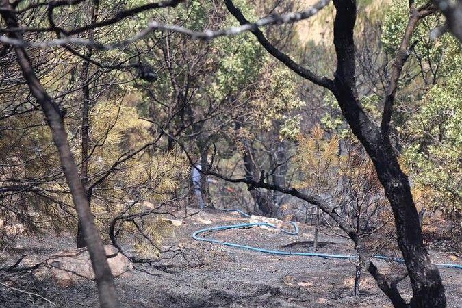 Bozdoğan'da yangın kontrol altında