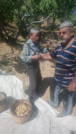 Aydın'da çiftçilere şok