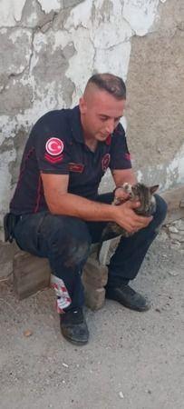 Nazilli'de yavru kedi kurtarma operasyonu