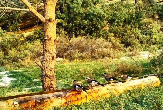 Aydın'da yaban hayvanları unutulmadı
