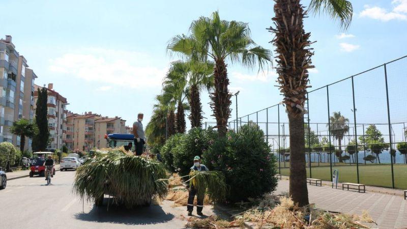 Karamürsel'de palmiyelere bakım