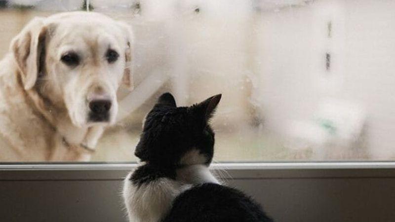 Sokak hayvanları için ortak kararlar alındı