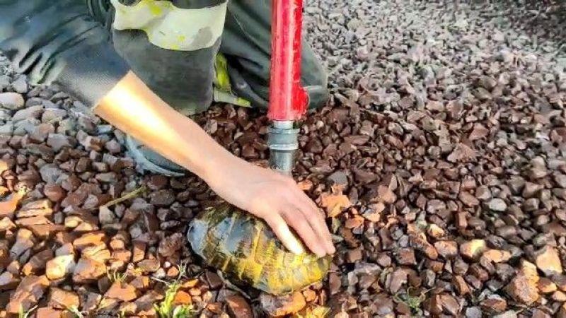 Alevler arasında kalan kaplumbağayı itfaiye kurtardı