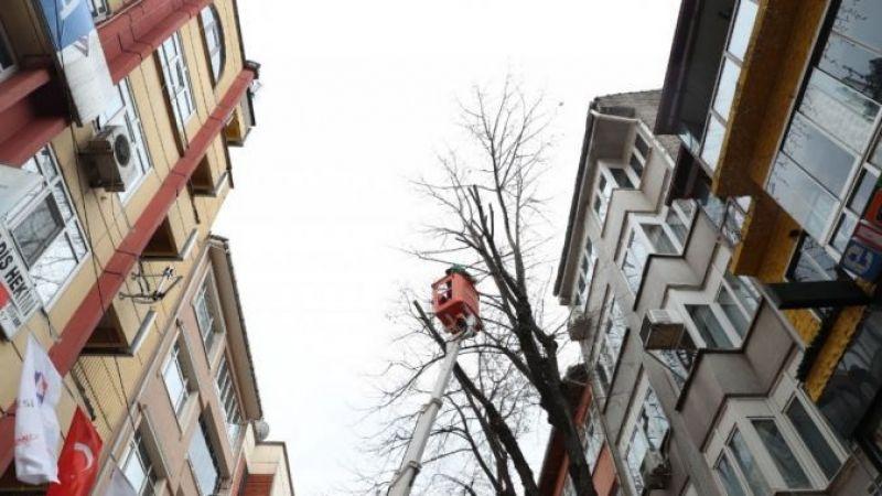 İzmit'te ağaçlar budanacak: O cadde tek şeride inecek