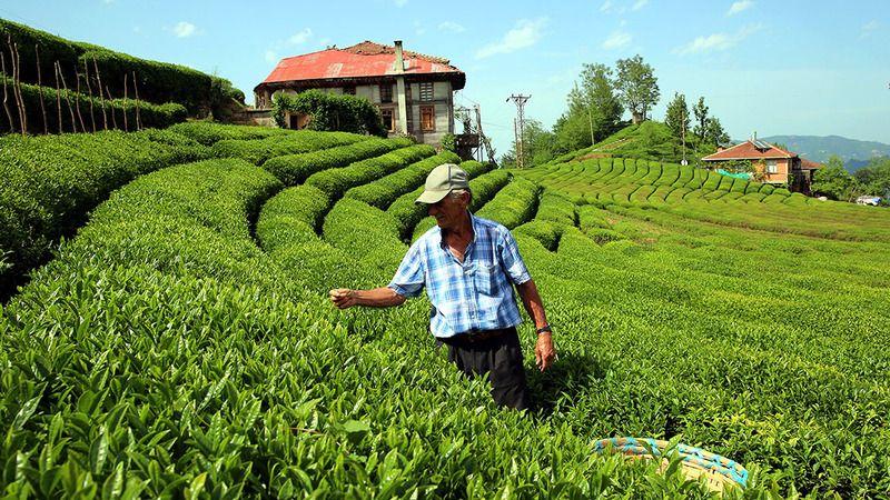 """Çay üreticilerine tam kapanmadan önce """"Köyünüze dönün"""" çağrısı"""