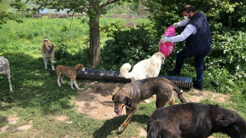 Kartepe'de sokak hayvanları unutulmuyor